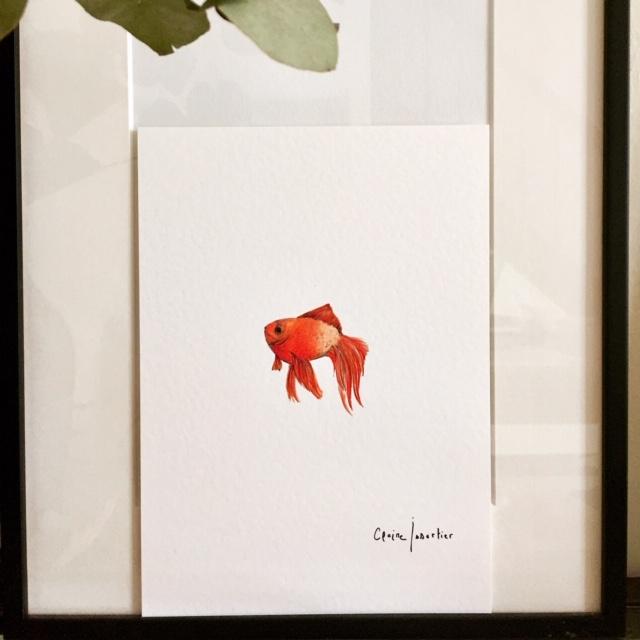 "Poisson Rouge ""toujours"""