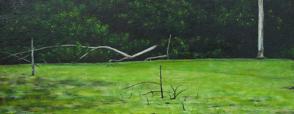 Swamp with Algea in Bloom.JPG