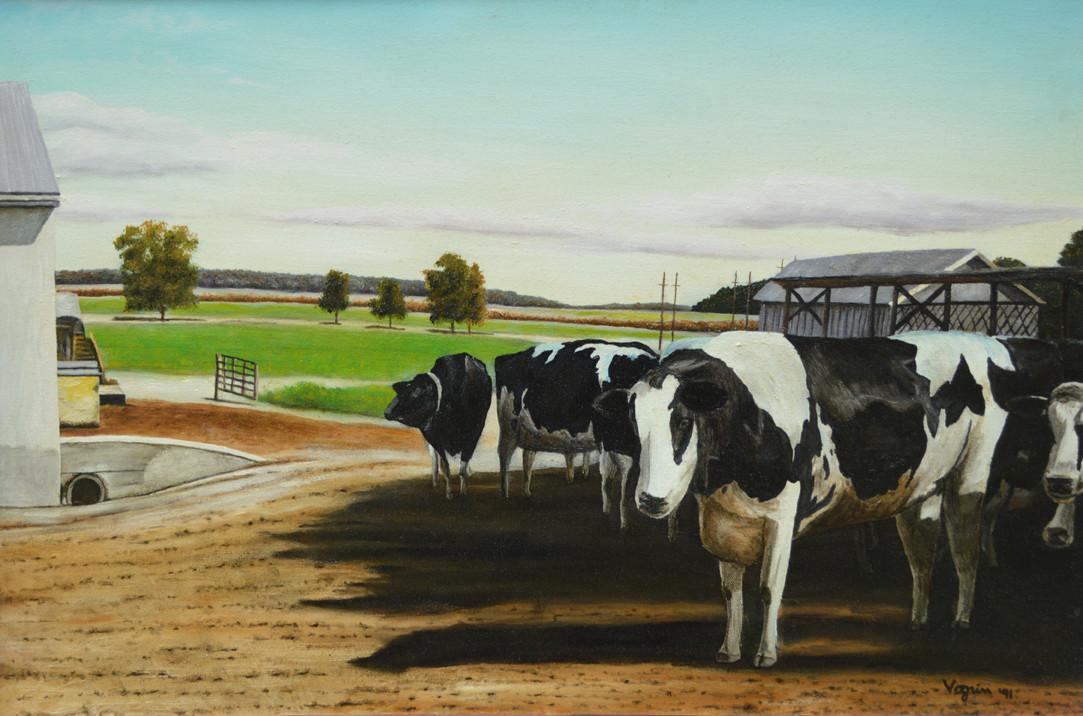 Cows: Awaiting Servitude