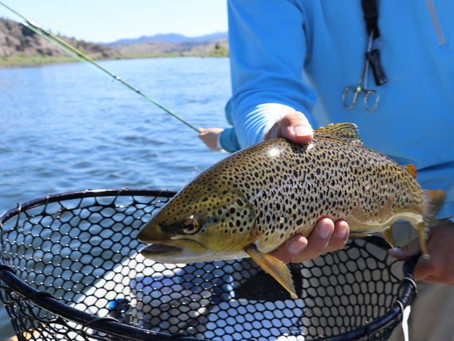 Top 15 Fishing spots in New Zealand