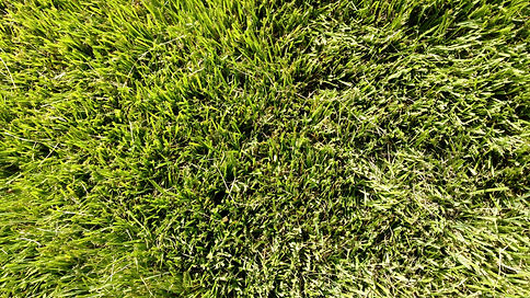 Thick lawn