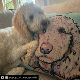 Bow Creek Brittany Doodles hugging a pillow