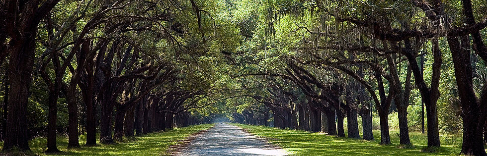 View of oak tree covered path