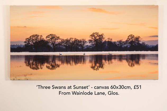 Three Swans at Sunset canvas.jpg