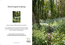 Dean's Coppice in Spring card.jpg