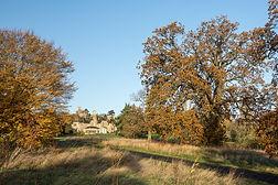 Autumn - 6 low.jpg