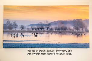 Geese at Dawn canvas.jpg