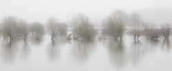 Ashleworth Ham in Flood