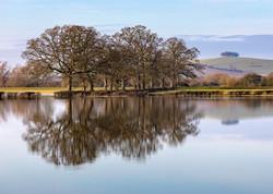 Tree Reflections from Wainlode Lane