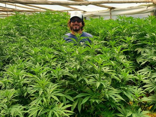 Un emprendimiento de Cannabis medicinal, reunió U$S 1,5 millón