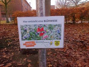Blühwiesen.jpg