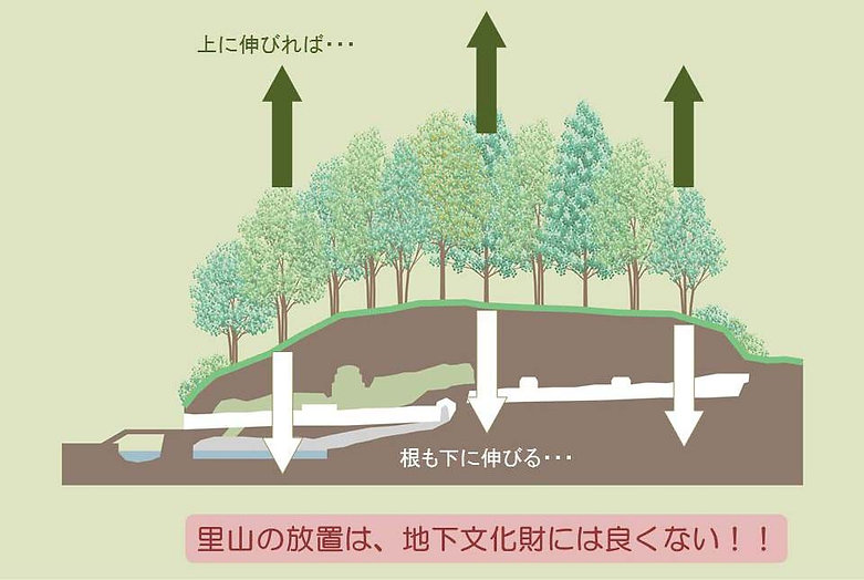 樹木成長と根の生長.jpg