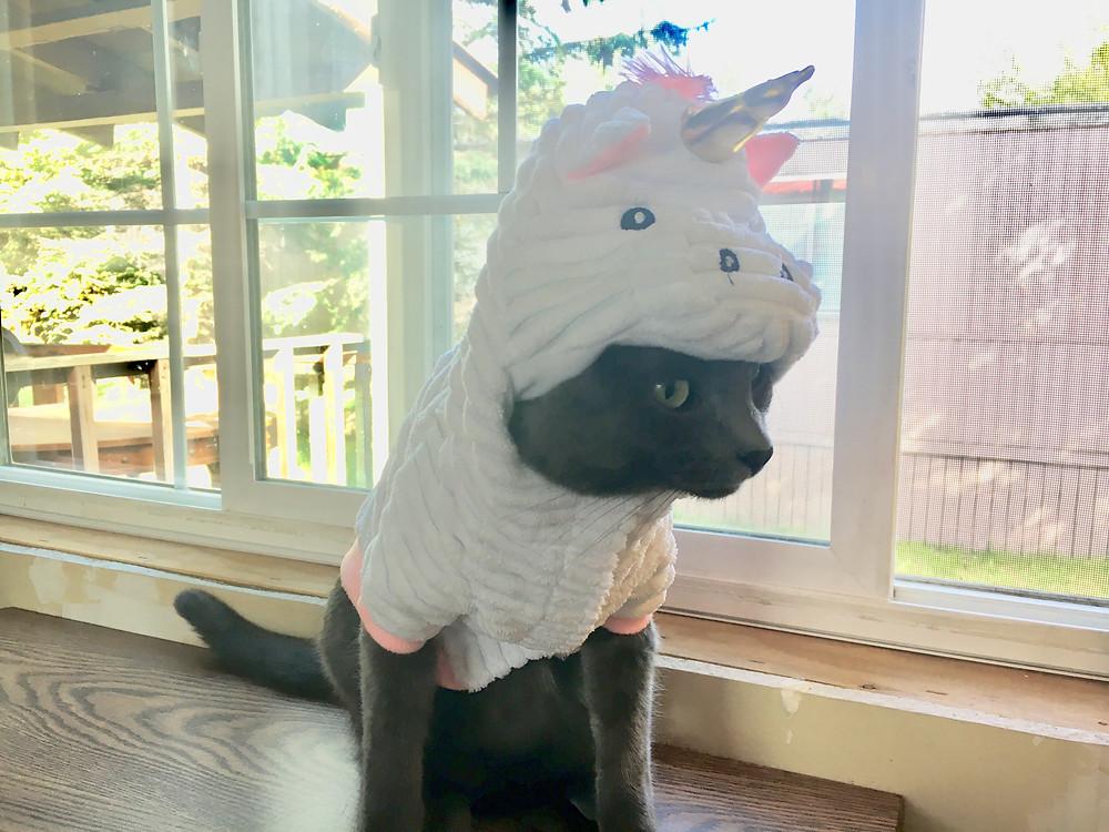 Cat wearing a unicorn costume