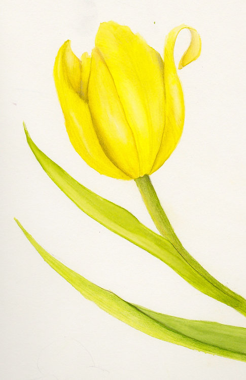 Yellow Tulip - 4 pack notecards