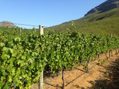 Six things I learned from working in a winery