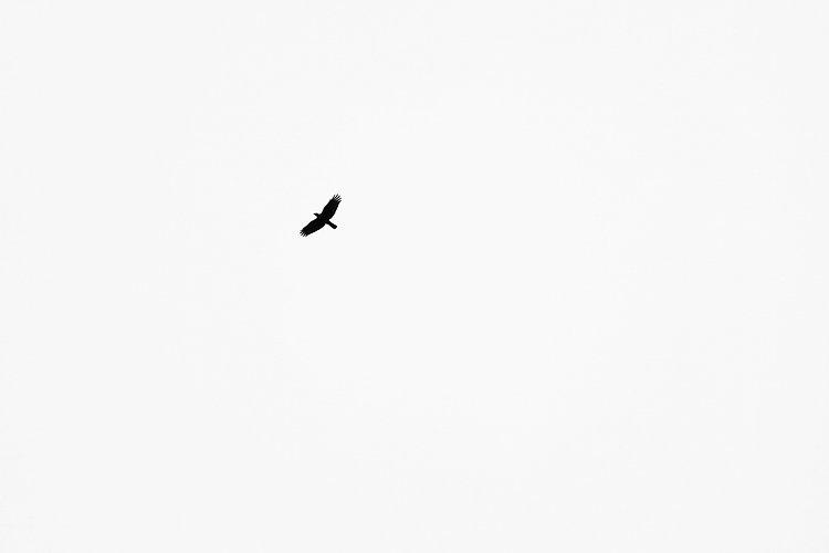crow-4477368_1920.jpg