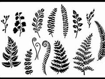 Ferns and Greenery