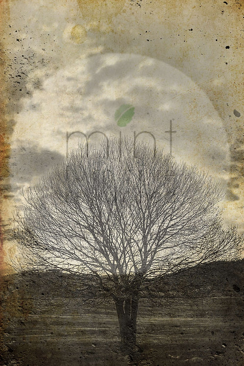 Mint Sepia Tree Decoupage
