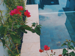 Beautiful Bouganviellias