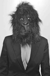 Vous avez vu passer la gorille?