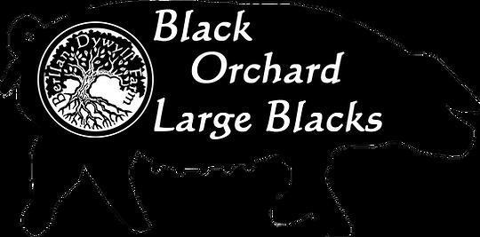 Large Black Logo.png