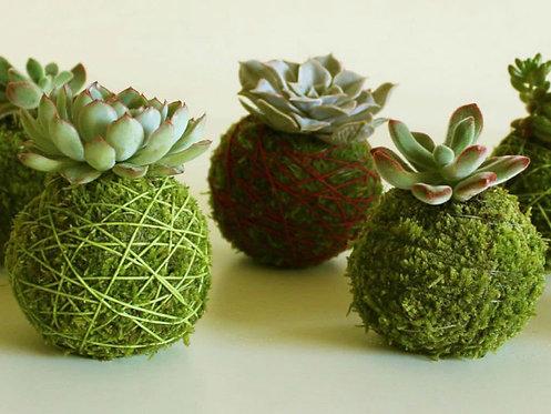 Kokedama di piante grasse e succulente