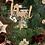 Thumbnail: Ghirlanda