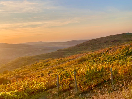 The Land Beyond The Forest: In Search of Romanian Wine