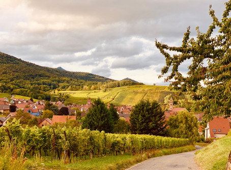 Gingerbread Houses & Gingerbread Wine: Two Unmissable Alsace Wineries