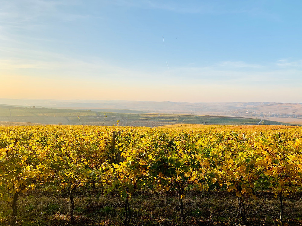 The Vineyards of Jidvei DOC