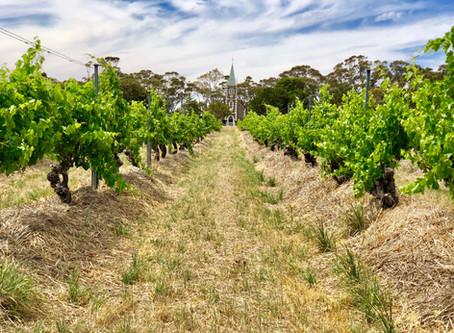 Henschke's Hill of Grace: An epiphany in Eden Valley
