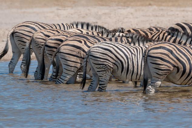 Zebras at the waterhole, Etosha National Park, Namibia