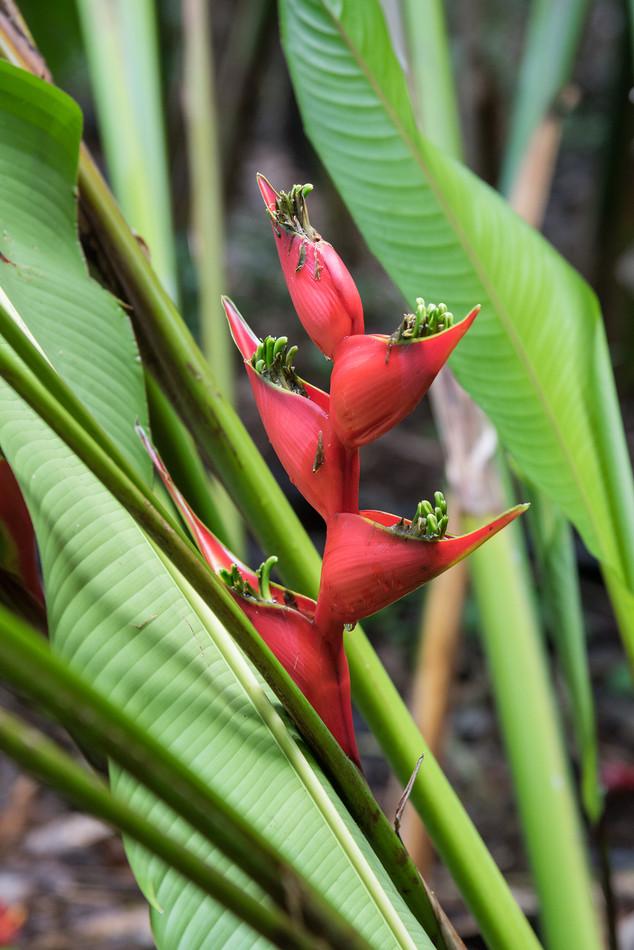 Jardin des parfums et des épices, La Réunion