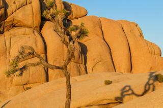 Jumbo Rocks, Joshua Tree NP, California
