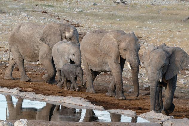 Elephant family, Etosha National Park, Namibia