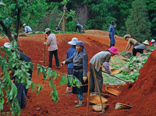 Plantation at Dian Lake Park, Kunming