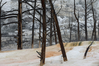 Angel Terrace, Mammoth Hot Spring, Yellowstone NP