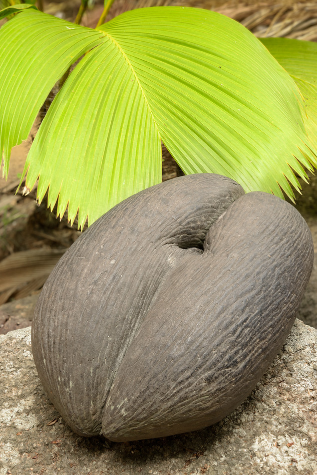 Fond Ferdinand, Seychelles