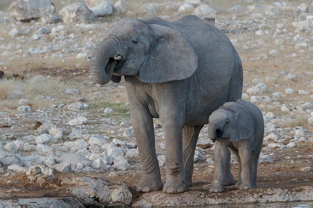 Mother and baby elephants, Etosha National Park, Namibia