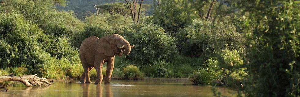 ElephantDrink.jpg