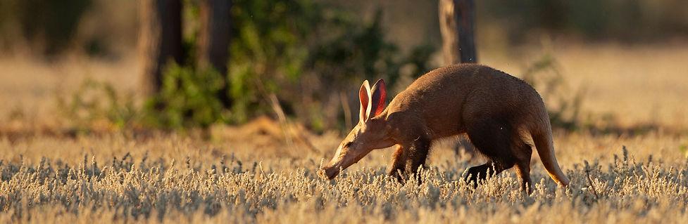 AardvarkBanner2.jpg