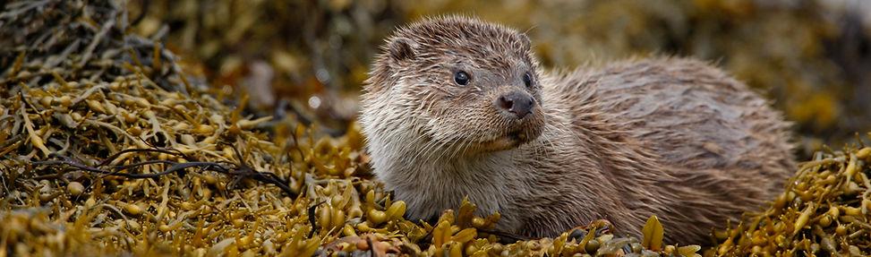OtterBanner.jpg