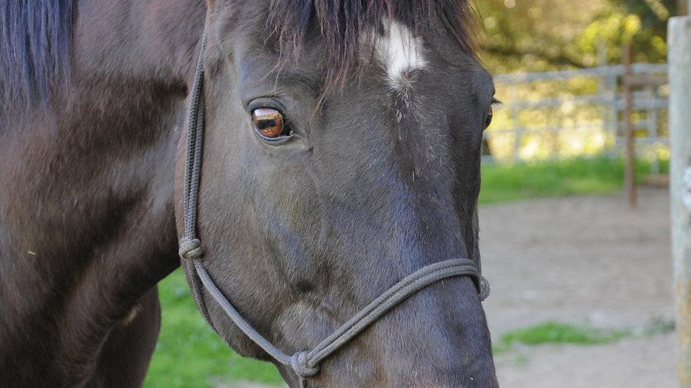 Equine Nutritional Consultation