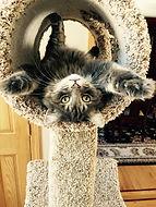 Upside down cat.jpg