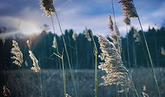 Untitled (Nature).jpg