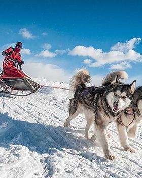 Cani-da-sleddog-1.jpg