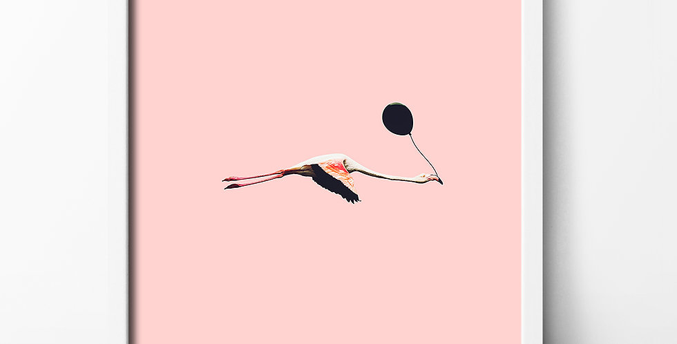 Action Zebra | Fly flamingo