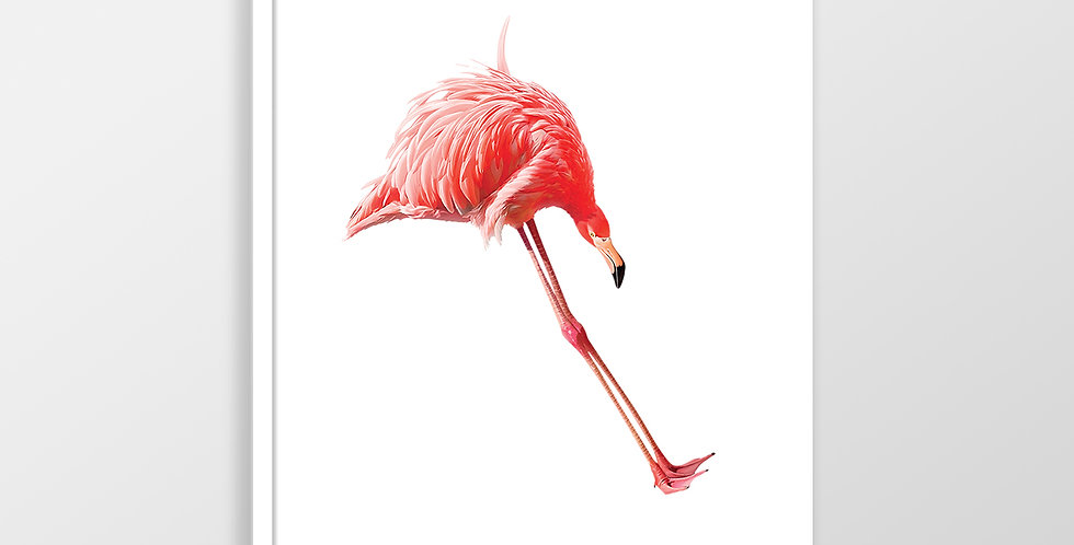 Action Zebra | Jump flamingo