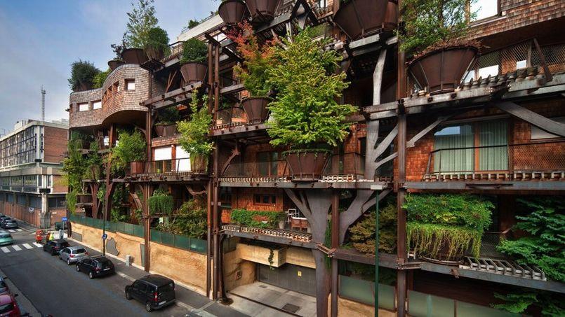 arbre-immeuble.jpg