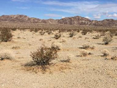 Spotlight: Vegetation Community Mapping, MCAGCC Twentynine Palms, California